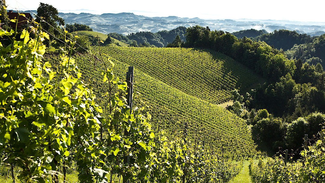 The picture shows Vineyards in Styria