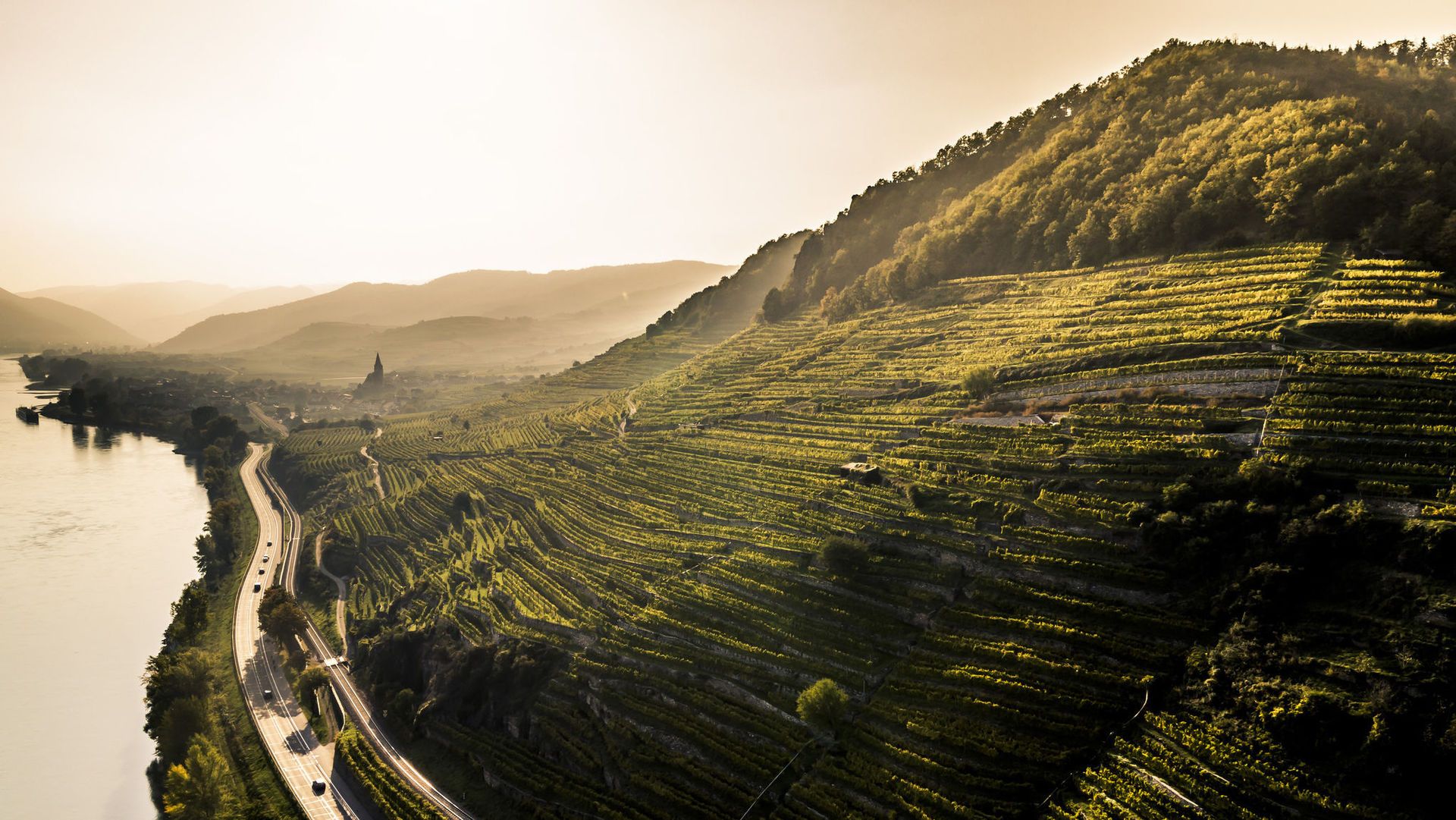A picture shows steep vineyards along the Danube River.