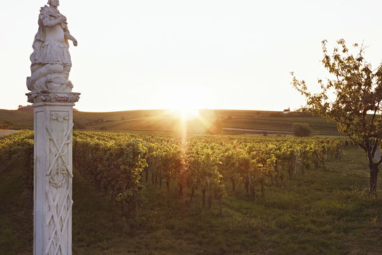 The picture shows a vineyard in Mittelburgenland