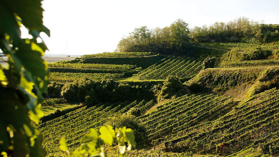 Vineyards are pictured