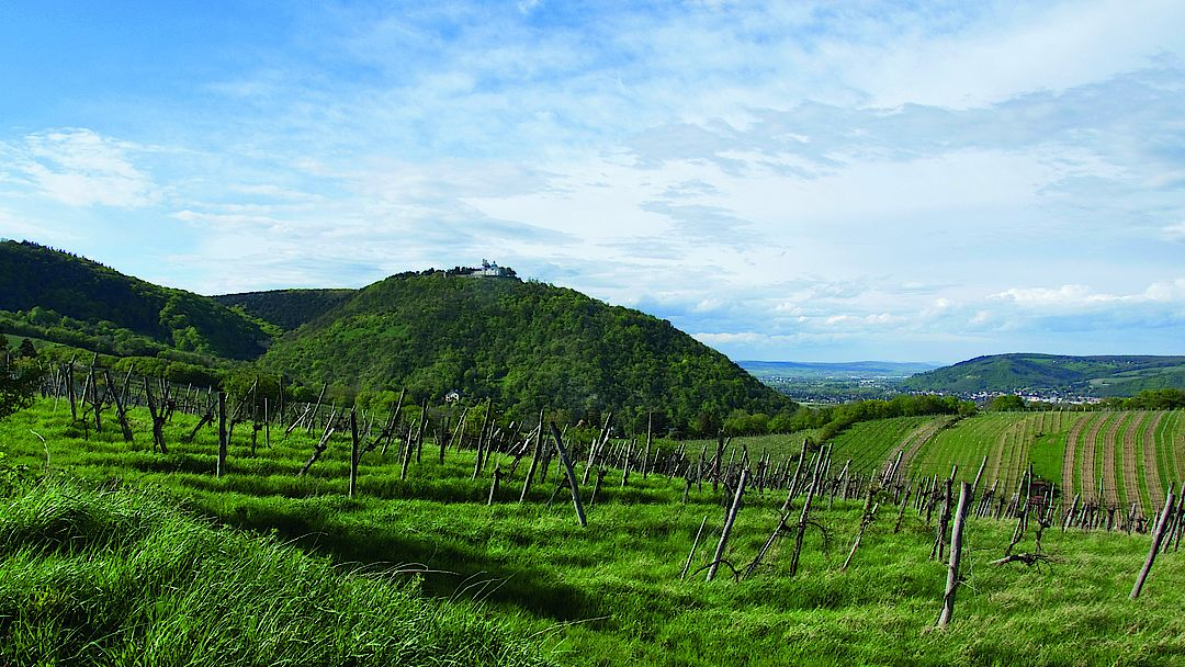 A picture shows vineyards in Vienna