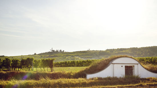 A picture shows the landscape of Weinviertel