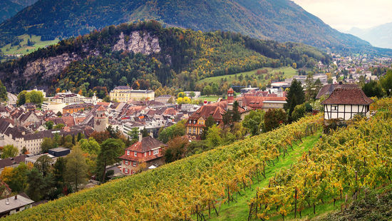 A picture shows vineyards near Feldkirch with alpine mountains in the background.