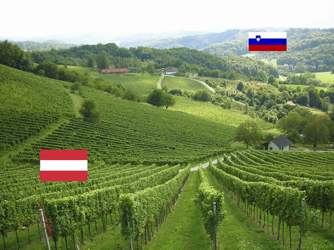 A picture shows the Ried Zieregg, a single vineyard site on the border to Slovenia, © Gerhard Elze