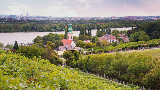 "A picture shows vineyards in the ""Kahlenbergerdorf"" (Kahlenberg village) on the border of Vienna and Lower Austria."