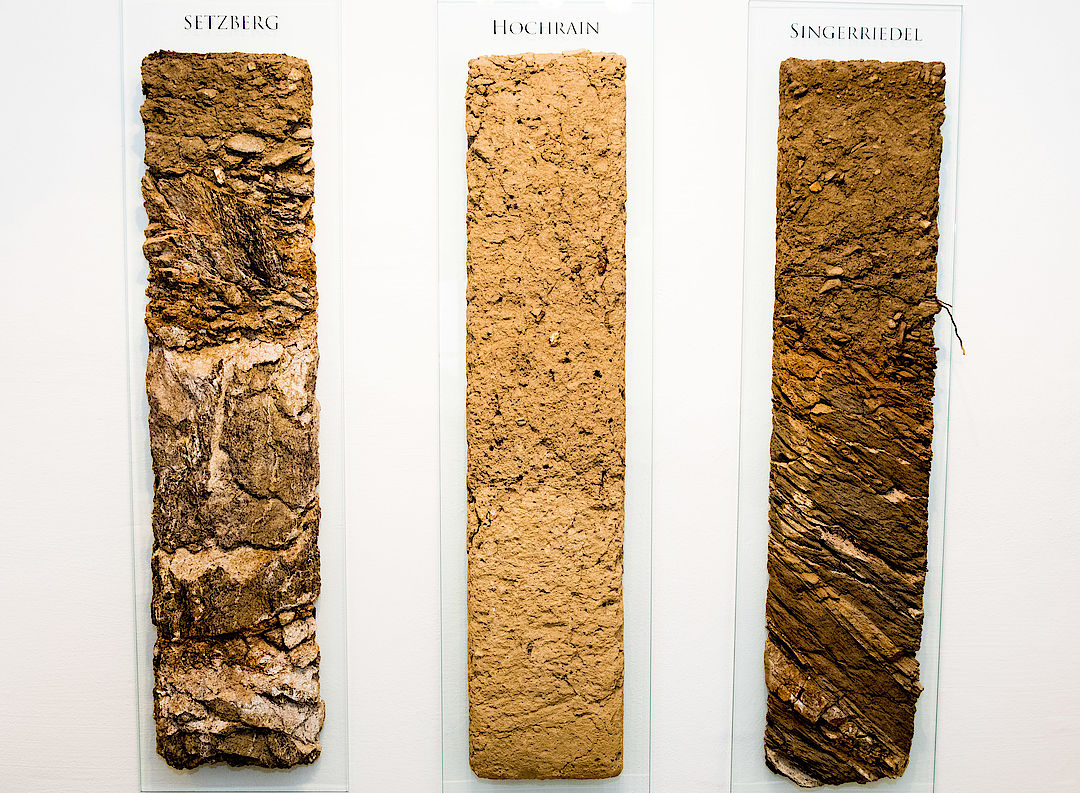 A picture shows soil profiles