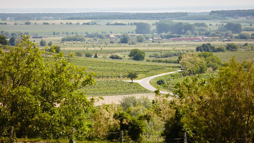 The picture shows Vineyards in Mittelburgenland