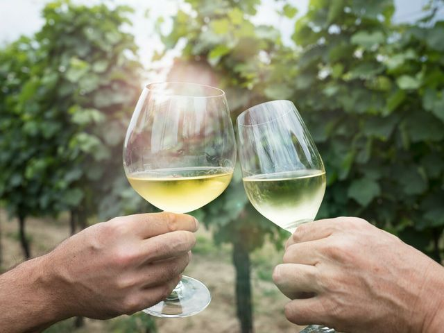 A picture shows two hands toasting with two glasses of white wine in a vineyard.