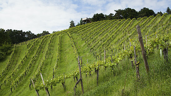 A picture shows vineyards in Styria