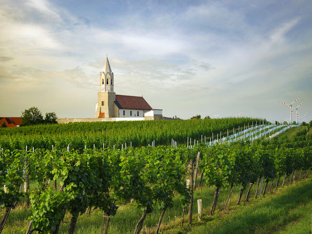 The picture shows a church and vineyard in the winegrowing region Carnuntum.